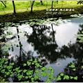 2012-03-馬太鞍濕地6