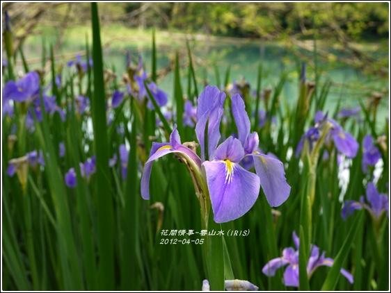 2012-04-雲山水8