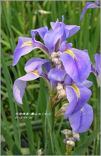 2012-04-雲山水37