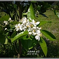 2012-03-柚花1