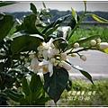 2012-03-柚花2