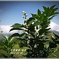 2012-03-柚花3