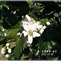 2012-03-柚花4