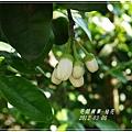 2012-03-柚花5