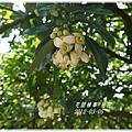 2012-03-柚花12