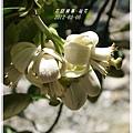 2012-03-柚花15
