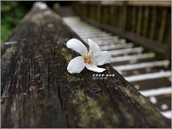 2012-04-嬉桐樂3