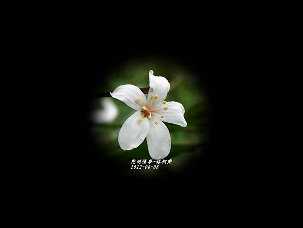 2012-04-嬉桐樂5