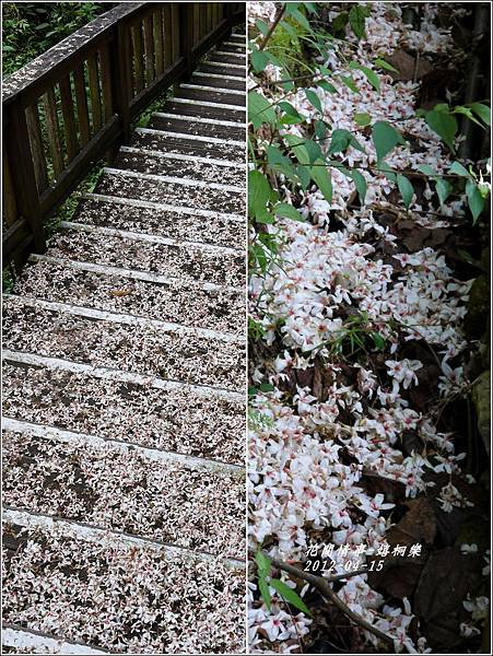2012-04-嬉桐樂22
