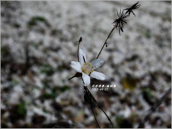 2012-04-嬉桐樂26