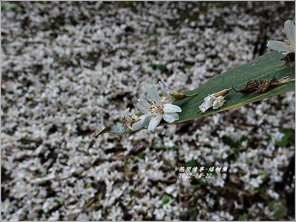 2012-04-嬉桐樂27