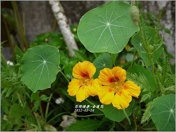 2012-04-金蓮花2