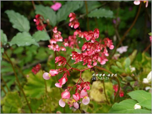 2012-04-海棠花1