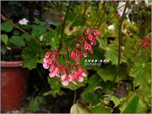 2012-04-海棠花2