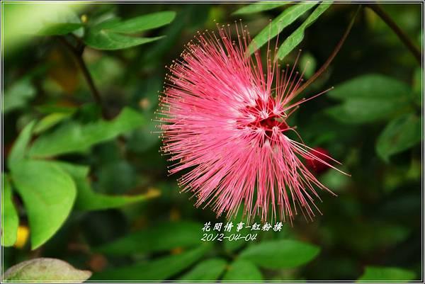 2012-05-紅粉撲6