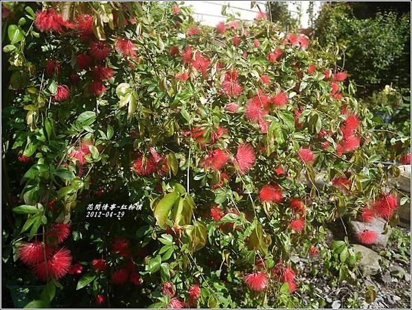 2012-05-紅粉撲16