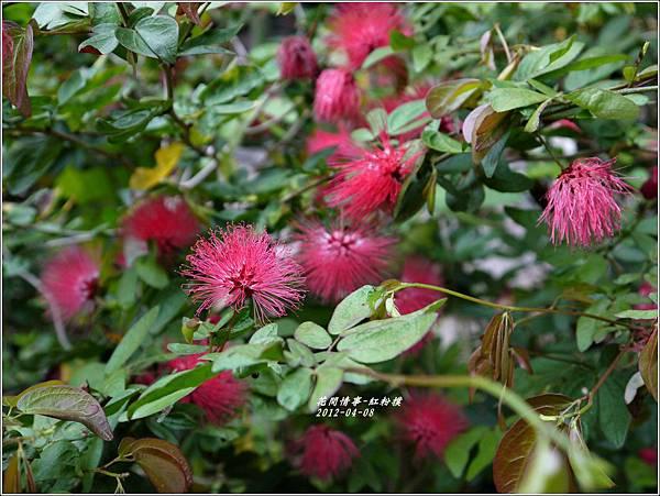 2012-05-紅粉撲8