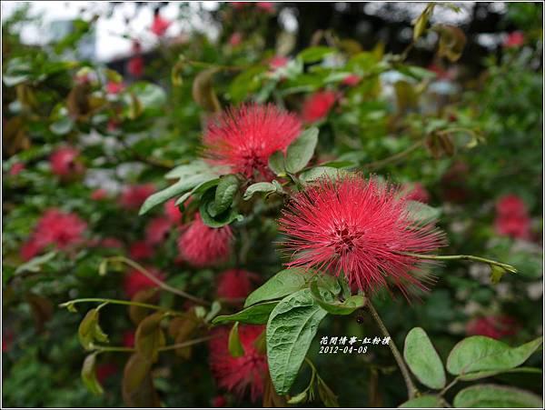 2012-05-紅粉撲9