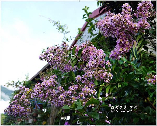 2012-06-紫薇10