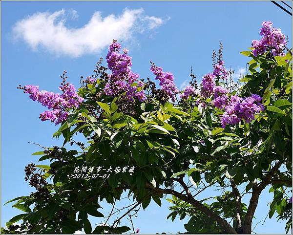 2012-07-大花紫薇1
