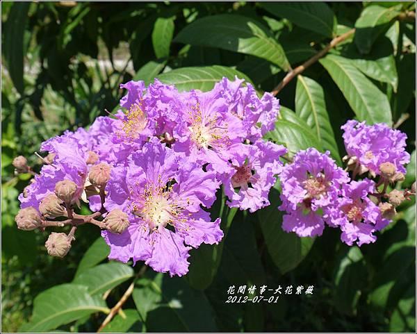 2012-07-大花紫薇5