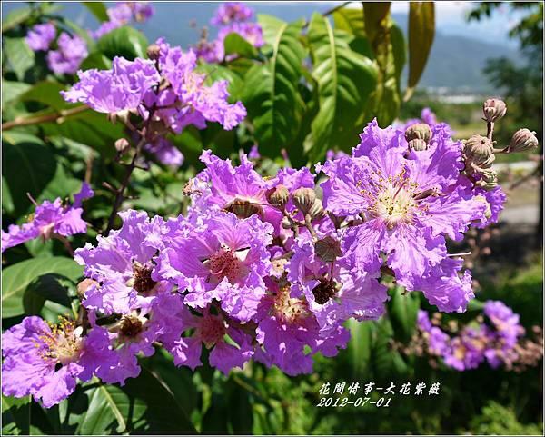 2012-07-大花紫薇6