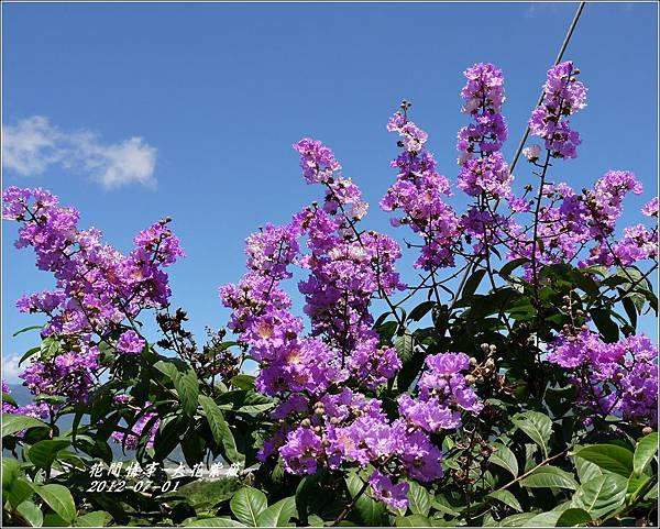 2012-07-大花紫薇7