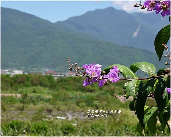 2012-07-大花紫薇8