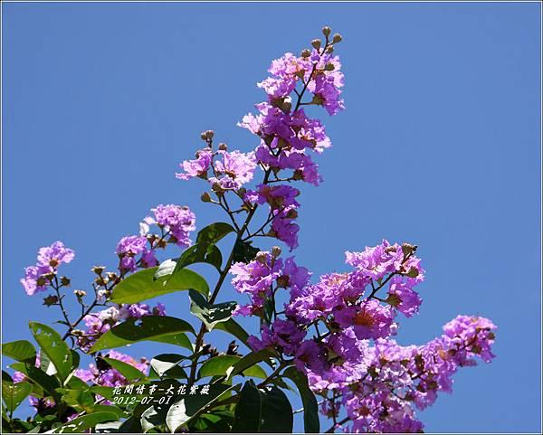 2012-07-大花紫薇14