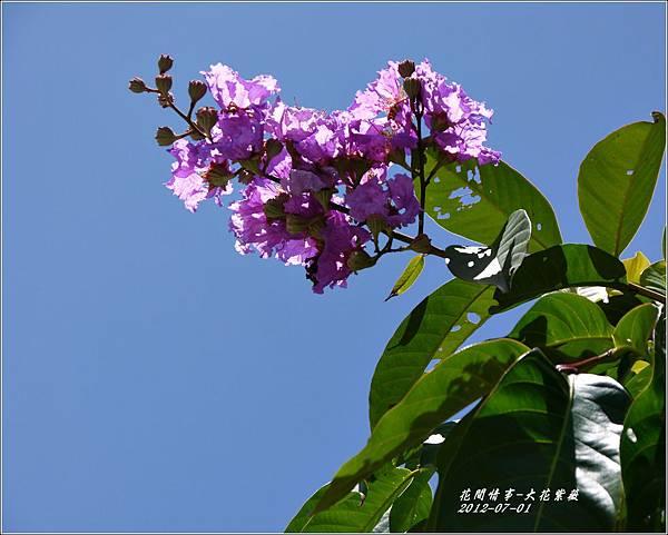 2012-07-大花紫薇15
