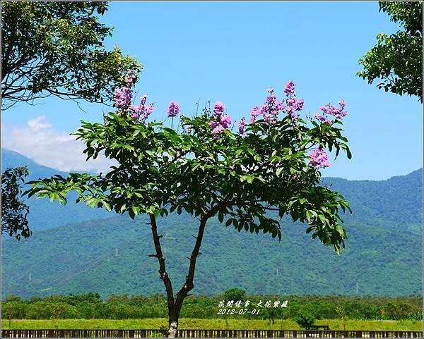 2012-07-大花紫薇16