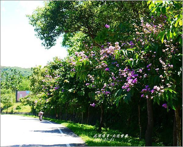 2012-07-大花紫薇17