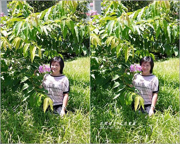 2012-07-大花紫薇20