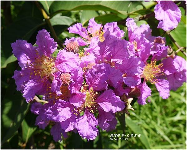 2012-07-大花紫薇22