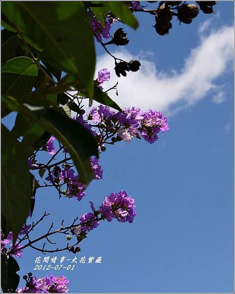 2012-07-大花紫薇24