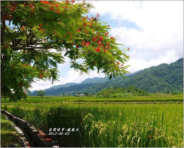 2012-07-鳳凰木7