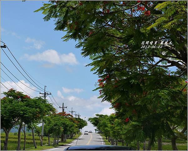 2012-07-鳳凰木8