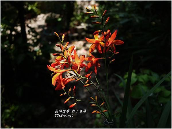 2012-07-射干菖蒲9
