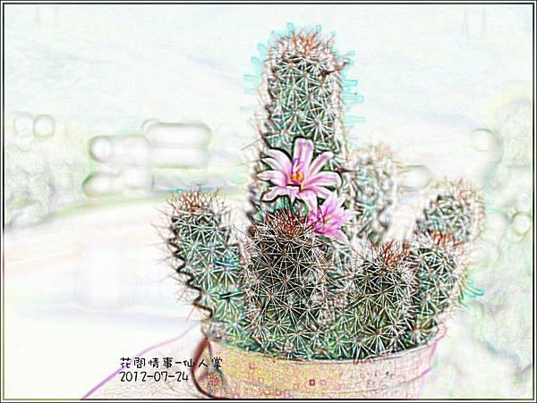 2012-07-仙人掌8