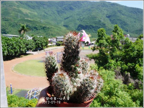 2012-07-仙人掌2