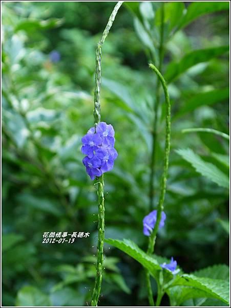 2012-08-長穗木12