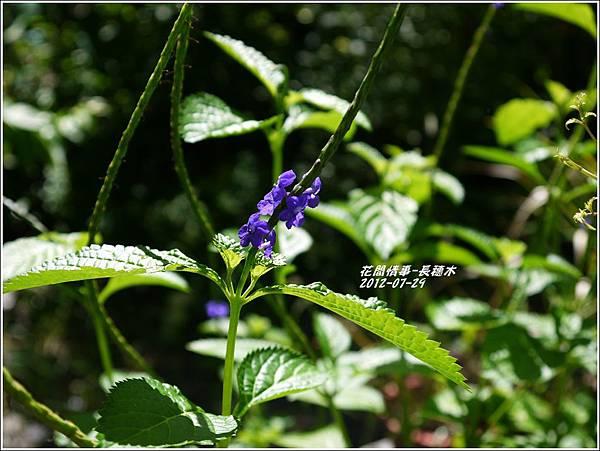 2012-08-長穗木1