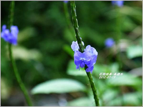 2012-08-長穗木6
