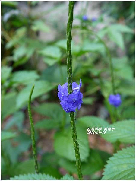 2012-08-長穗木10