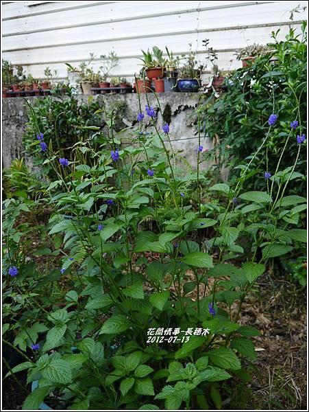 2012-08-長穗木11