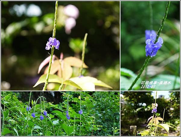 2012-08-長穗木4
