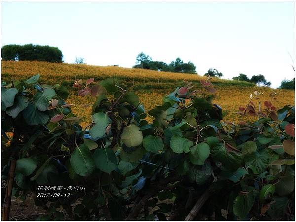 2012-08-赤柯山6