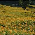 2012-08-赤柯山18