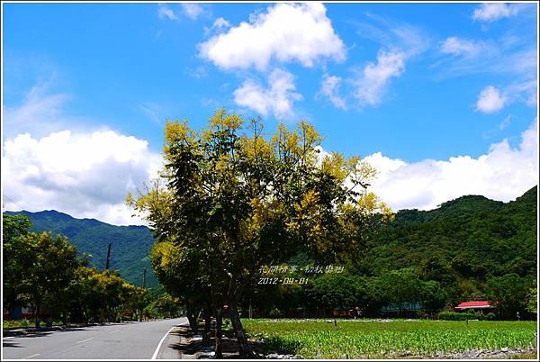 2012-09-初秋欒樹4