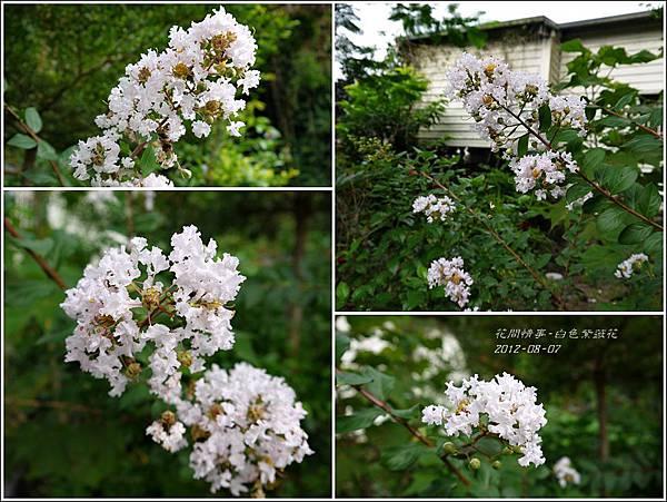 2012-08-白色紫薇花2